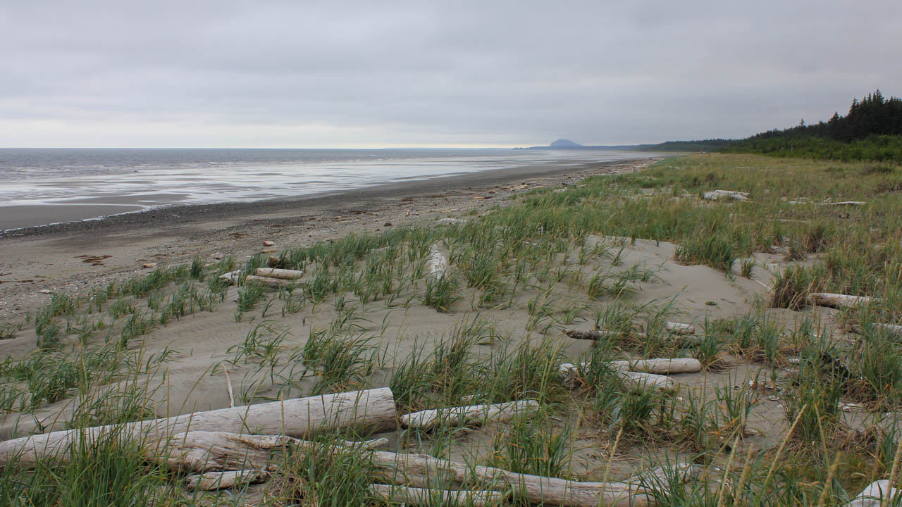 Bleached driftwood on Pacific Ocean beach, Masset, Haida Gwaii