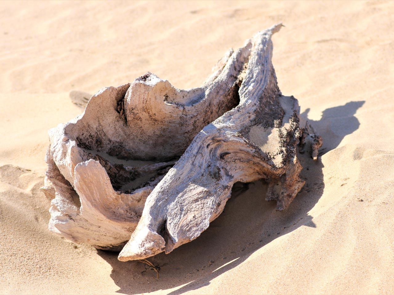 bleached-driftwood-on-a-south-african-beach
